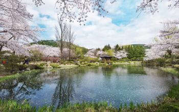 Korea's Spring Festivals 2017 in April