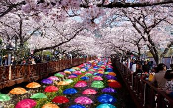 Why is April the Best Time to Visit Korea?