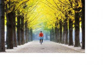 5 Experiences You Absolutely Must Have in Nami Island