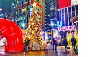 Best Places to See Christmas Lights in Seoul and Busan