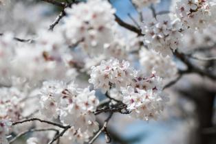 Soft as Spring