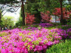 Bright April Flowers, Keimyung University Campus, Daegu