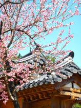 Traditional Roof and Flowers, Keimyung University, Daegu